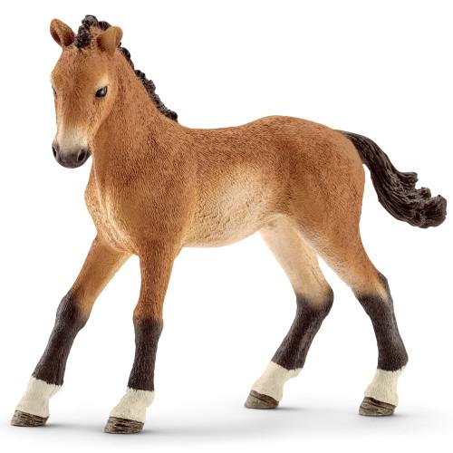 Tennessee Walker Foal