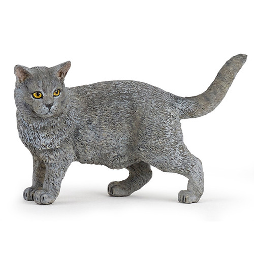 Cat Chartreux