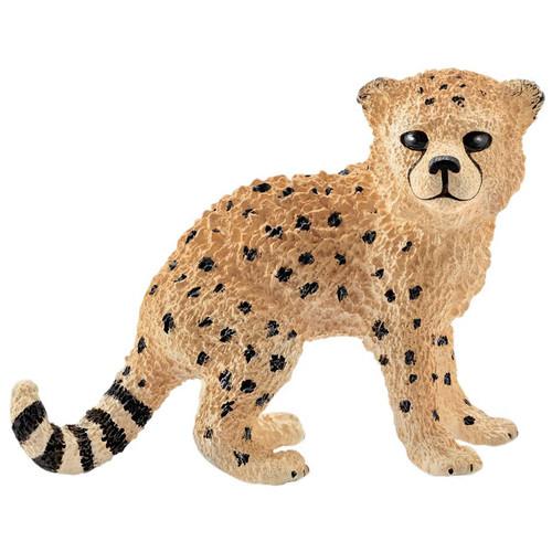 Cheetah Cub 2016