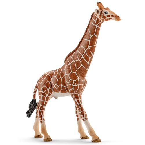Giraffe Male
