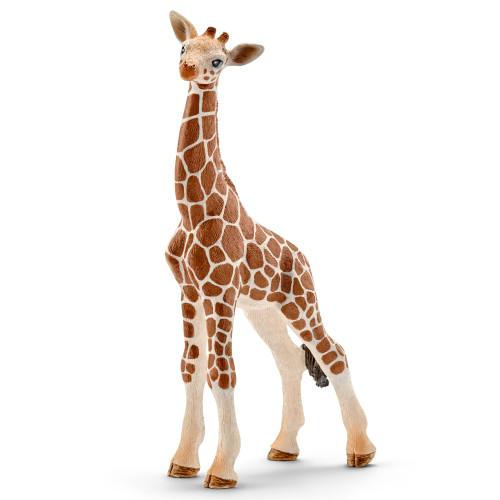 Giraffe Calf 2016