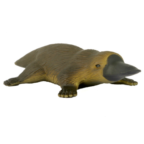 Small Platypus