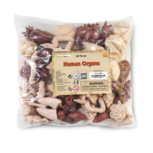 Human Organs Bulk Bag 48pc