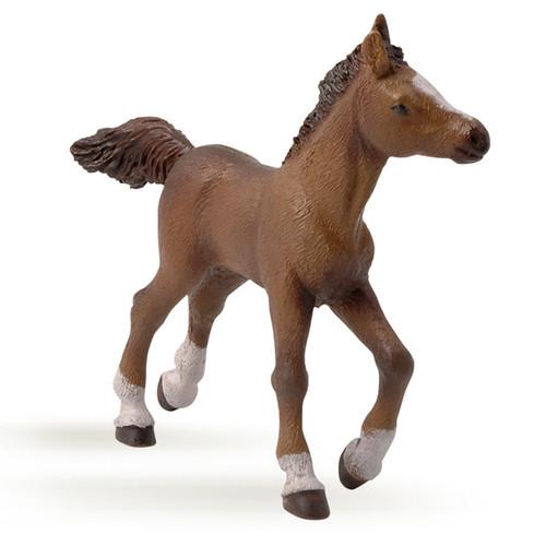 Anglo Arab Foal