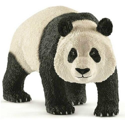 Giant Panda Male