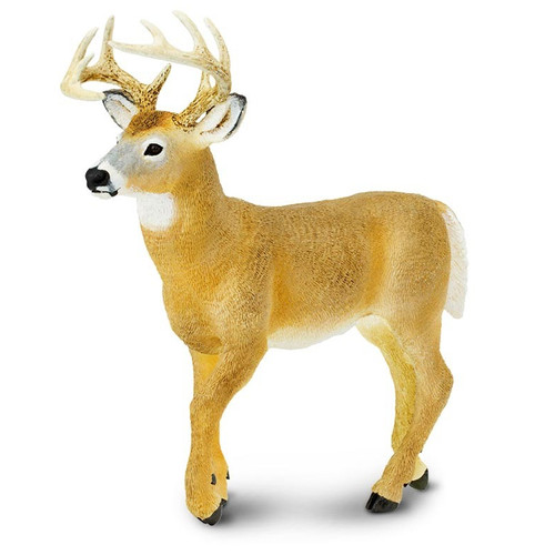 Whitetail Buck Jumbo