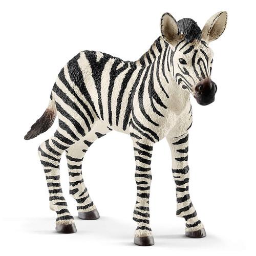 Zebra Foal 2018