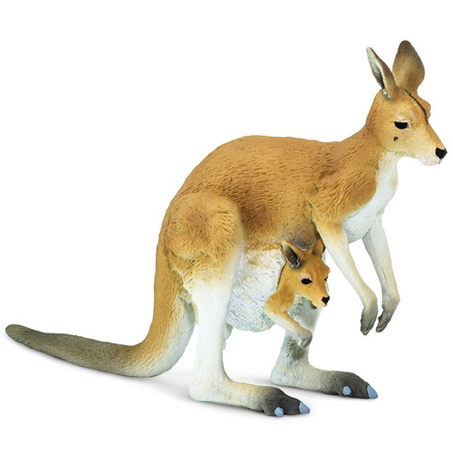 Kangaroo with Joey Safari
