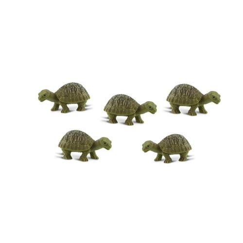 Mini Tortoises