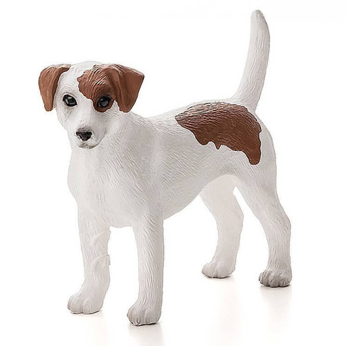 Jack Russell Terrier Mojo