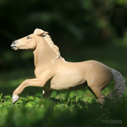 Brumby Mare