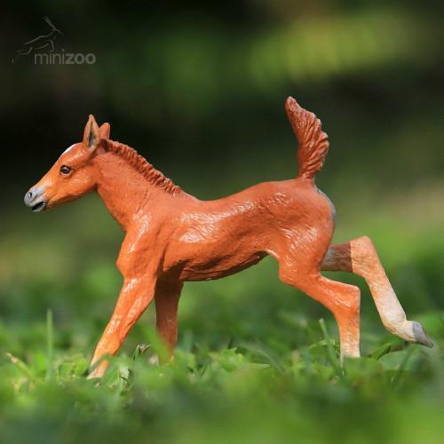Brumby Foal