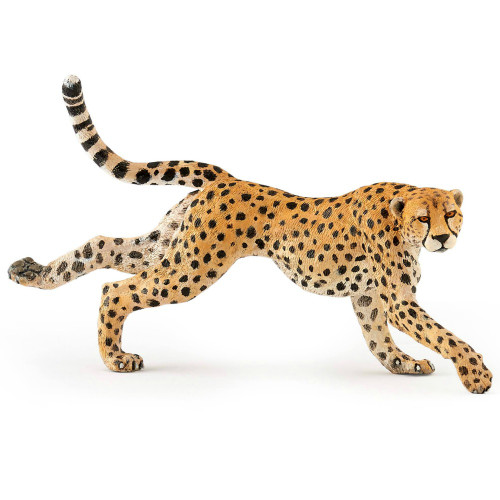 Cheetah, Running