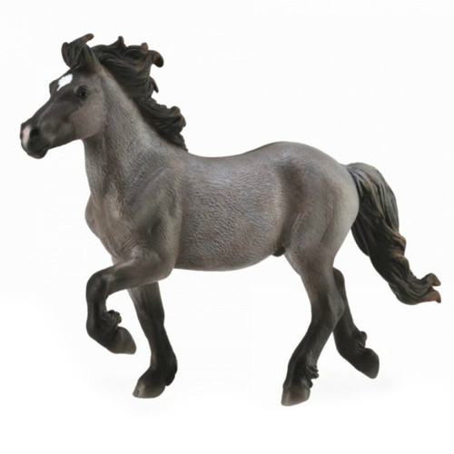 Icelandic Stallion Blue Dun