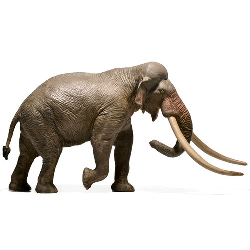 Straight-Tusked Elephant