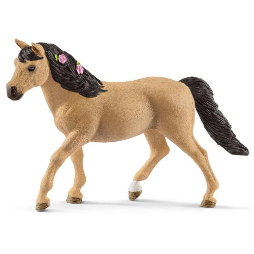 Connemara Pony Mare
