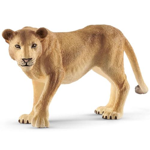 Lioness 2019