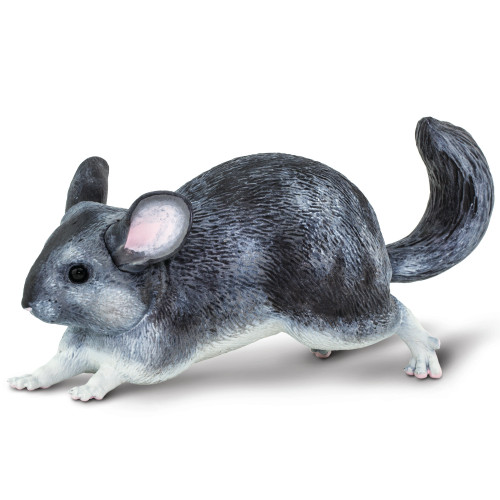 Chinchilla Jumbo