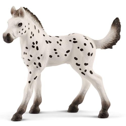 Knabstrupper Foal 2019