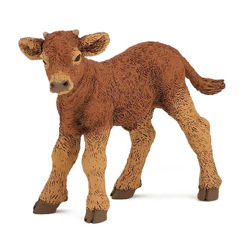 Limousin Calf