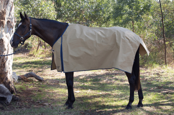 Canvas Horse Blanket