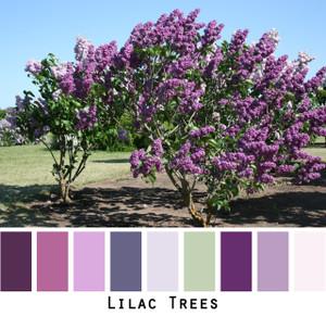 Lilac Trees - lavender plum lilac seafoam green  colors for blue eyes, green eyes, brown eyes, blonde hair, black hair, gray hair - photo by Inese Iris Liepina, Wrapture by Inese