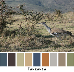 Tanzania - slate blue grey gray charcoal indigo blue rusty orange sage green taupe camel bird on a tanzanian plain for blue eyes, green eyes, brown eyes, blonde hair, brunette, redhead, black hair, gray hair - photo by Inese Iris Liepina, Wrapture by Inese