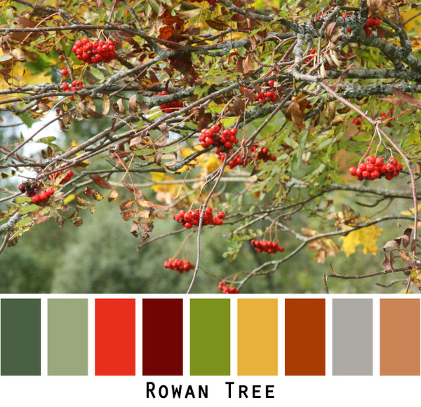 Rowan Tree - green red maroon cinamon grey gold raisin forest green colors for  green eyes, brown eyes,  brunette, black hair - photo by Inese Iris Liepina, Wrapture by Inese