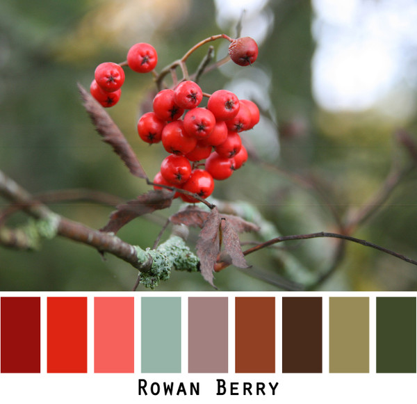 Rowan Berry - red maroon lichen dusty lavender raisin black oline and deep chocolate brown berry branch colors for blue eyes, green eyes, brown eyes, brunette, redhead, black hair, gray hair - photo by Inese Iris Liepina, Wrapture by Inese