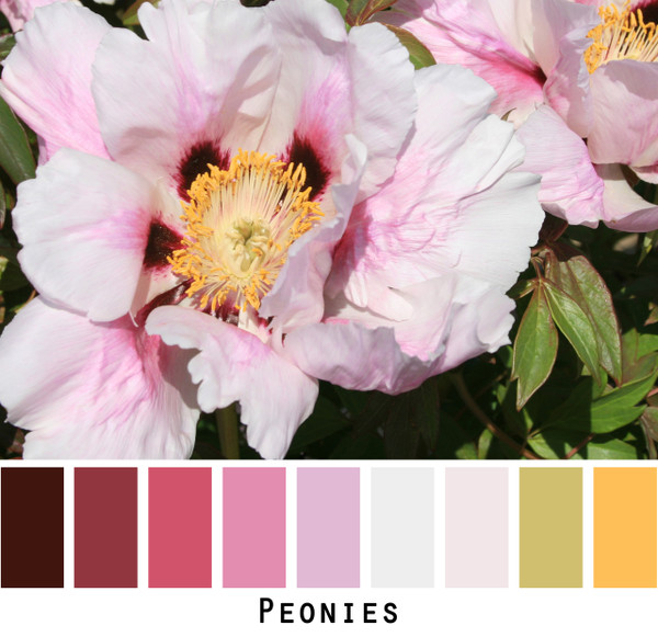 Peonies - pink yellow fuchsia purple rose plum colors for blue eyes, green eyes, brown eyes, blonde hair, brunette, photo by Inese Iris Liepina, Wrapture by Inese