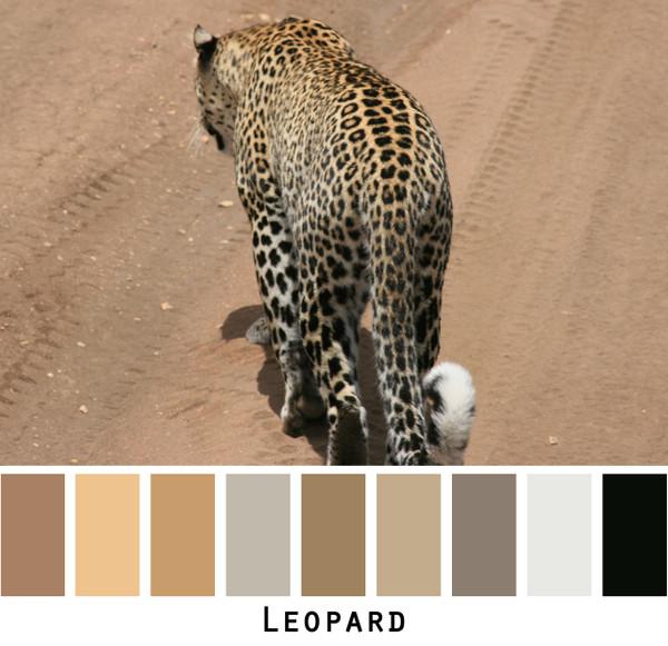 Leopard - brown gold tan beige black ivory leopard spots for green eyes, brown eyes, blonde hair, brunette, redhead, black hair - photo by Inese Iris Liepina, Wrapture by Inese