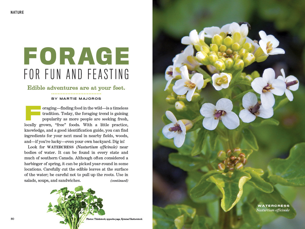 Plants You Can Eat - Old Farmer's Almanac
