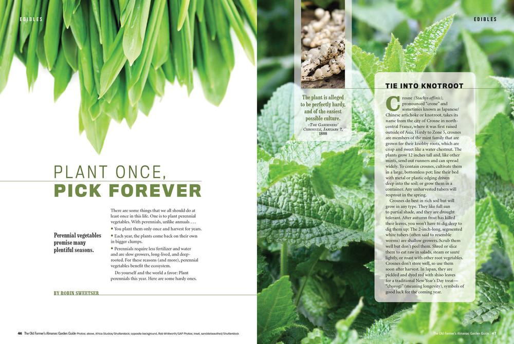 Perennial Vegetable Garden Guide