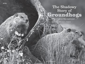 Groundhogs, Woodchucks - Old Farmer's Almanac
