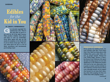 Colorful Corn - Old Farmer's Almanac