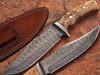 White Deer Damascus Steel Hunting Knife w/ Burl Olive Wood Hand
