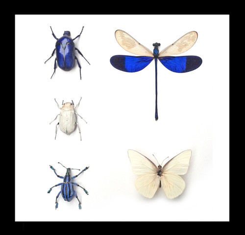 Blue / white insects Bits & Bugs