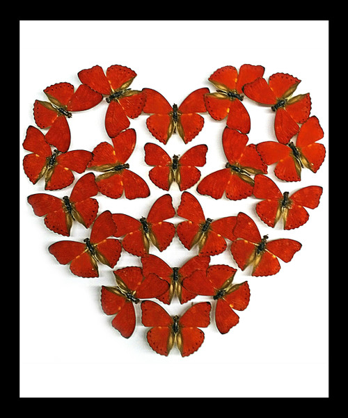 Red heart shaped framed butterfly Bits & Bugs