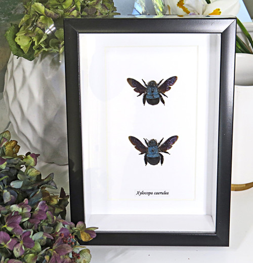 Bees framed insects bugs Bits & Bugs