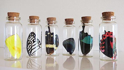Butterfly wings in bottles Bits & Bugs