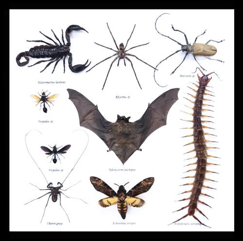batscorpionwaspdeathsheadmothcavespidercentipedebeetlescorpiongothichomemakerskullcreepylair