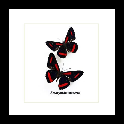 Amarynthis meneria