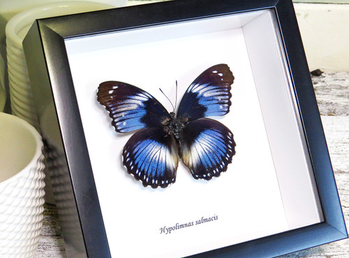 Collection - Single Framed Butterfly - Page 1 - Bits and Bugs
