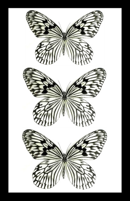 Real butterfly collection black and white Bits & Bugs