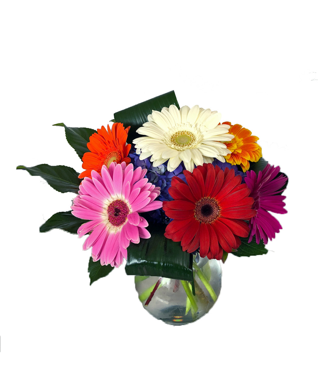 Flowers That Smile Gerbera Daisies Rose Blossom