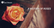 A History of Roses, Part I