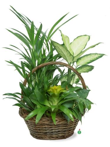 Tropical Dish Garden