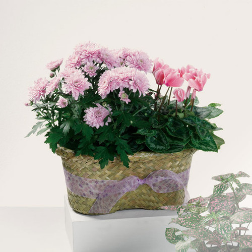 Blooming Duo Plant Basket
