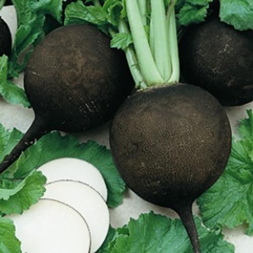 Black Spanish Round