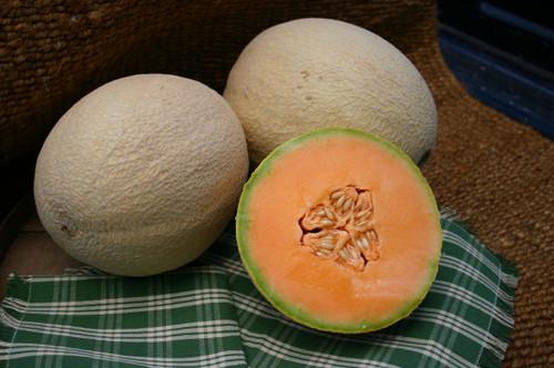 Atlantis F1 Melon
